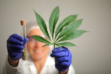 Doctor hand hold medical marijuana and seeds in vitro