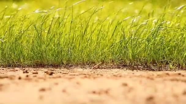 Lawn garden park grass field