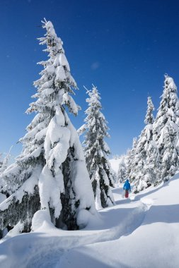 Hiking in the winter with snowshoes. Snowy Christmas landscape. Guy walking along a path in a mountain forest. Fir trees in the snow