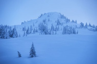 Beautiful winter landscape in the mountains. Spruce trees in the snow and snowdrifts on the hillside. Blue twilight