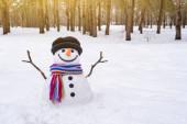 sněhulák v parku