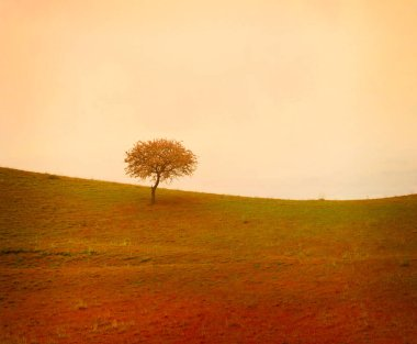 Evenin alone tree on meadow stock vector