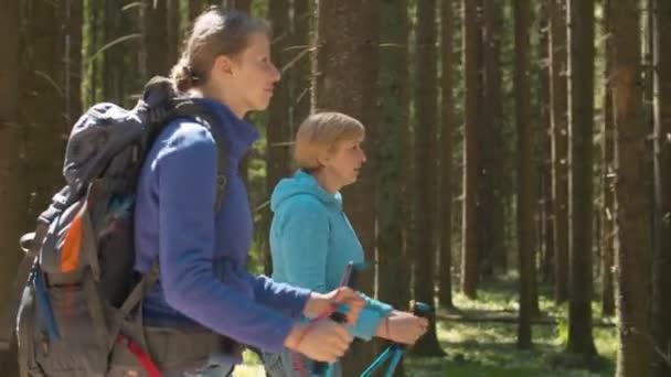 Nők sétálnak a tűlevelű erdőben