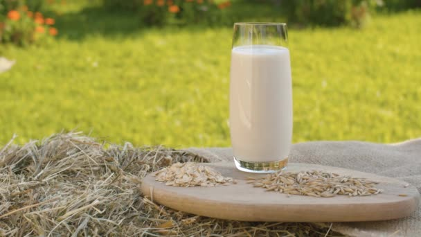 Oat milk, oat grains and oatmeal