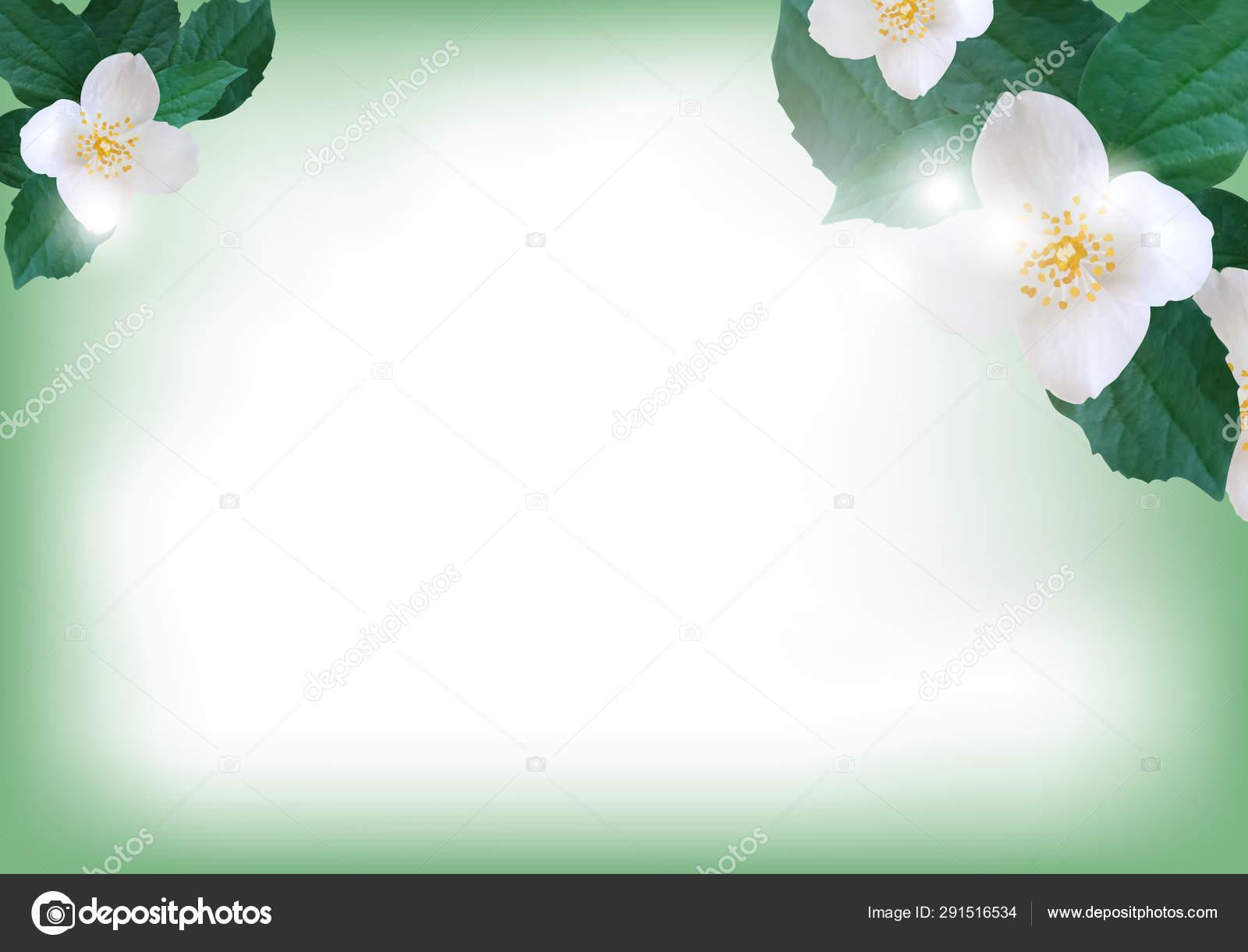 Flowers Jasmine Elegant Background For Greeting Card Or Wedding