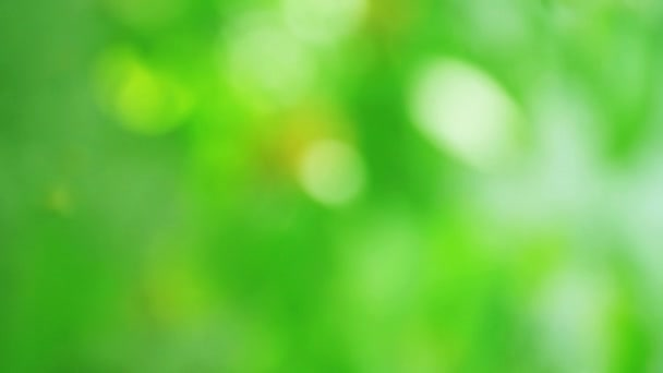 Abstract background of sunlit green leaves