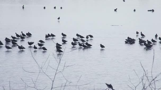 Skupina prolétajících ptáků v rybníce s některými létáním v