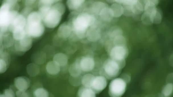 Tmavě zelené pozadí dubových listů za větrného dne