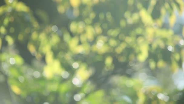 Defókuszált zöld levelek hasznos a háttérben