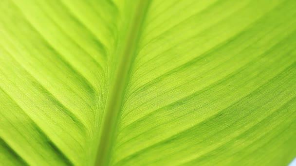 Pohled na spodní stranu tropického listu