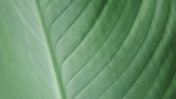 Macro view of a large tropical leaf