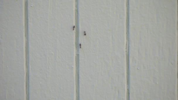 Insekten marschieren an einer Hauswand auf und ab