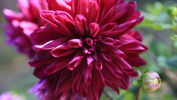 Konec temné letní květiny za slunečného dne