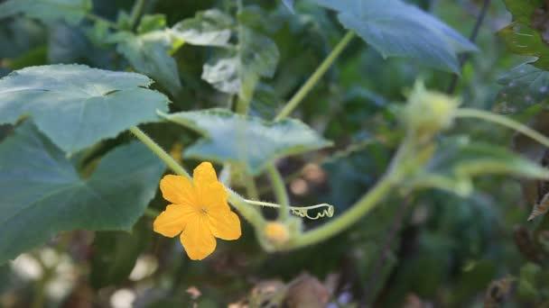 Növő növény virág, levél és inda