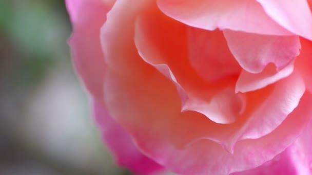 Velká Pastelově zbarvená květina v lehkovvánku