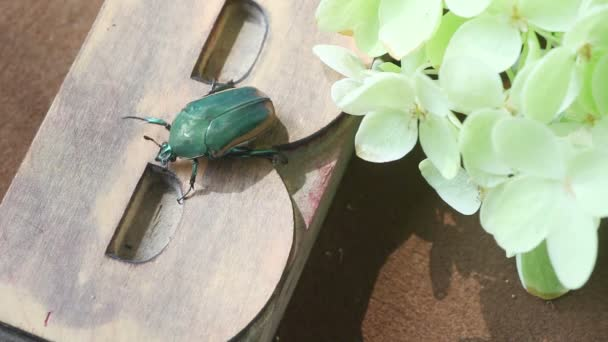 A green beetle slowly moves across a wood type letter B with hydrangeas to one side
