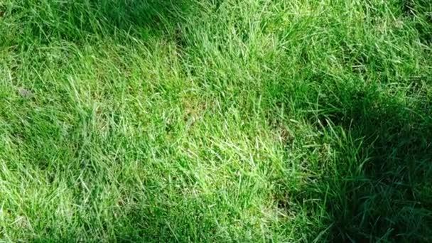der Schatten der Pflanzen fällt an einem sonnigen Sommertag auf einen schönen grünen Rasen, gefilmt durch Zoomen und Bewegen der Kamera