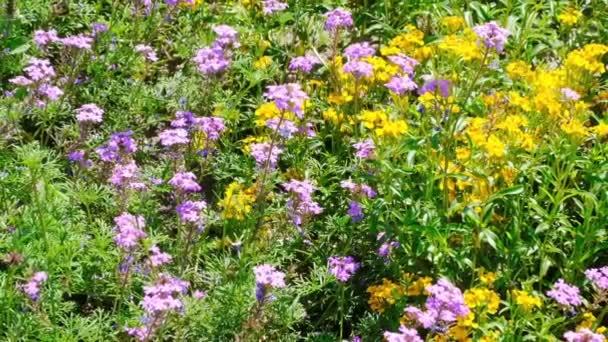 Krásná letní květina kvetoucí v květinové skici, natáčel s použitím lupy a posunutím kamery