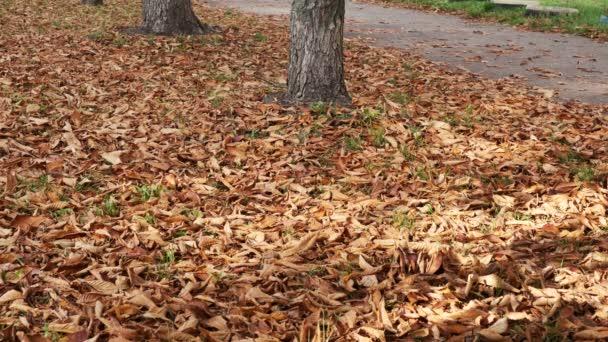 Herbst Stadt Natur Video-Skizze mit gelben Laub auf dem Bürgersteig und Rasen windig Oktober bewölkt Tag
