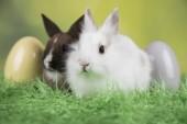 Bunny, králíků a velikonoční vajíčka na zeleném pozadí