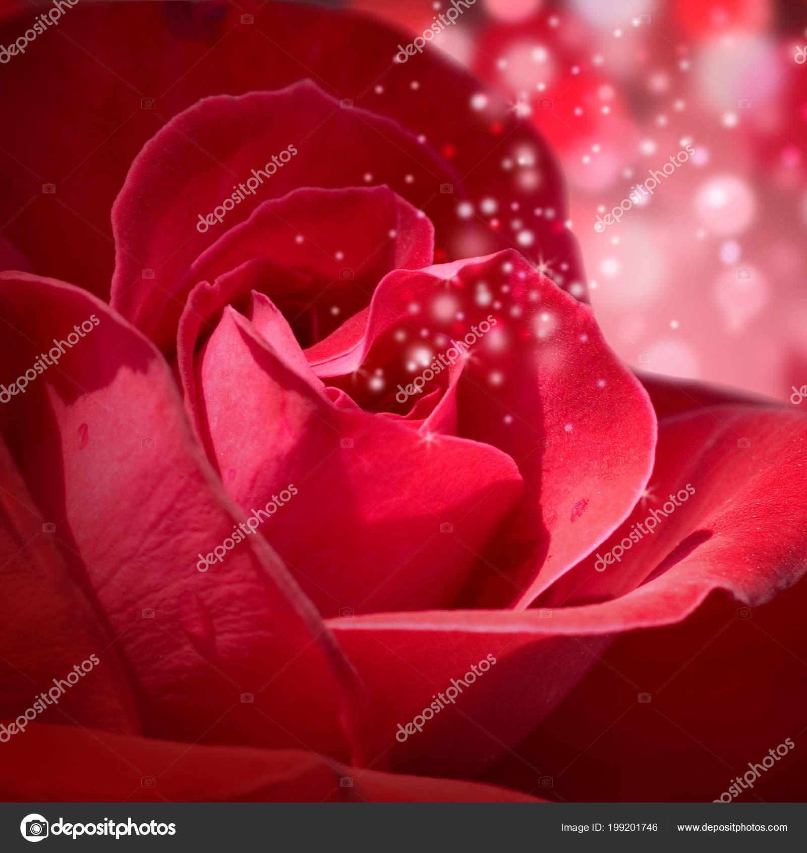 Sfondo Con Una Rosa Rossa Lucida Foto Stock Almatea 199201746