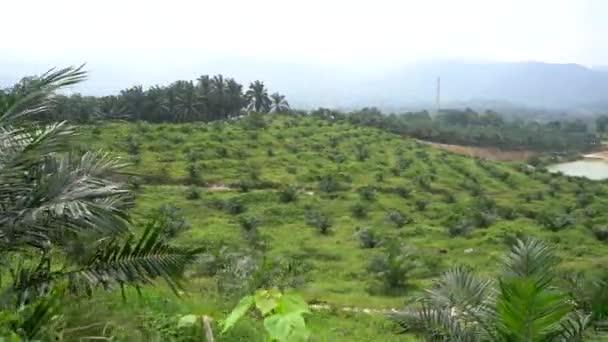 tropické zahradě s palmami v letním období