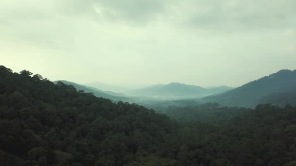 Observing view of tropical rainforest in Malaysia