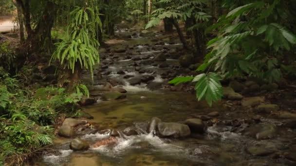 tropical waterfall in malaysia