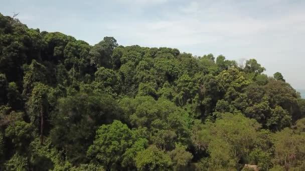 Vzdušný záběr tropického deštných pralesů v Malajsii