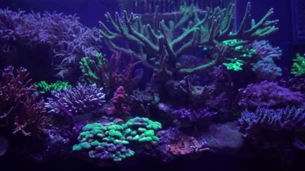 detailní záběry korálů pod neonovým světlem v akváriu