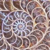 ammonite shell formě fraktální abstraktní pozadí obrázku