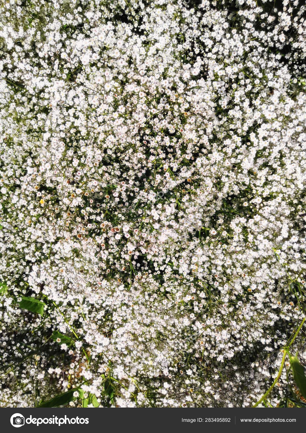 Albero Con Fiori Bianchi multiesposizione colpo albero con fiori bianchi fiore — foto
