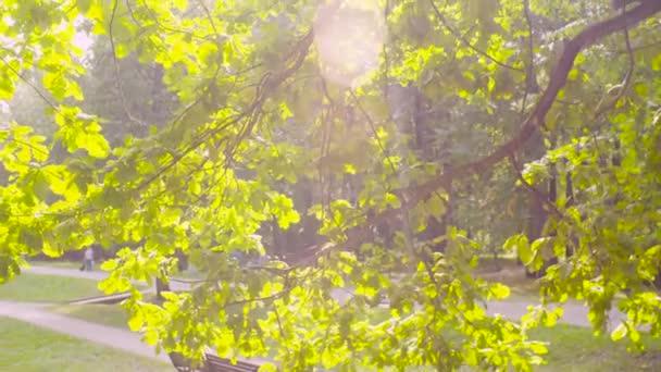 Pobočka dub v parku