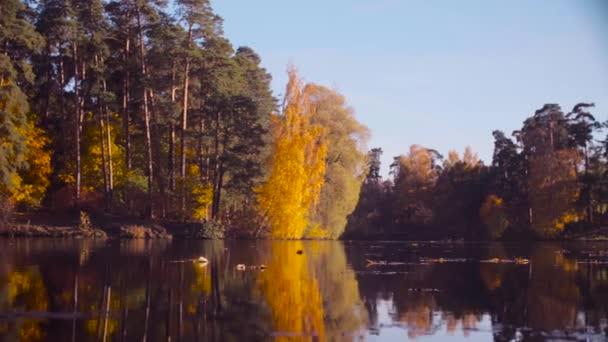 Podzimní krajina, barevné listy na stromech. Sezóna podzim.