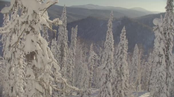 Panoramic view of the winter forest in the Siberian mountains