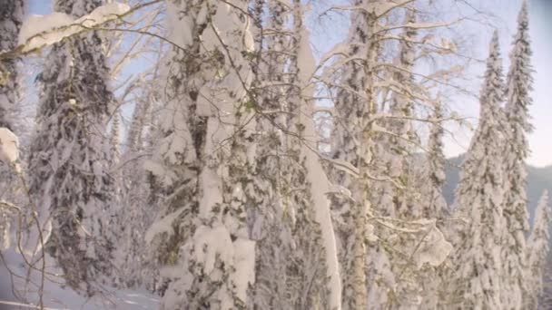 Winter forest in the Siberian mountains