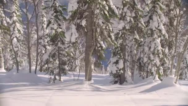 Snowy forest shot by a riding skier