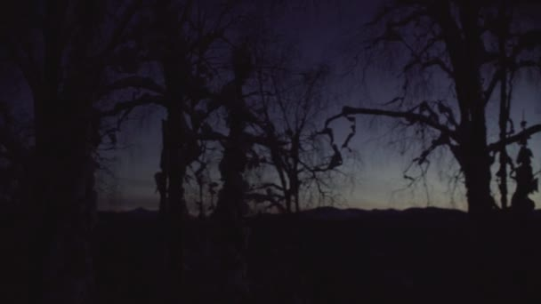 Silhouettes of trees against the sky. Winter forest in the night