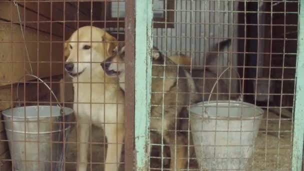 Psi v aviáři v útulku pro psy