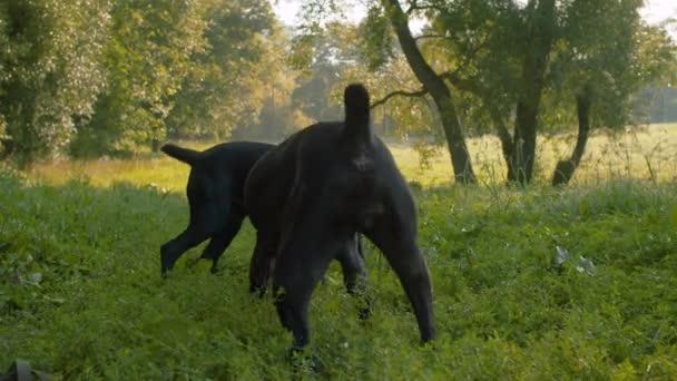 Hunde spielen gemeinsam mit dem Ring