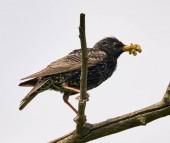 Seregély madár ül a fa ága