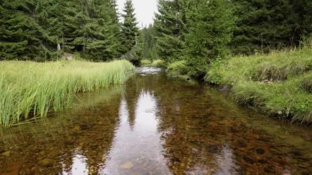 Škeble říční v zeleném lese s odrazem rostlin a obloha ve vodě