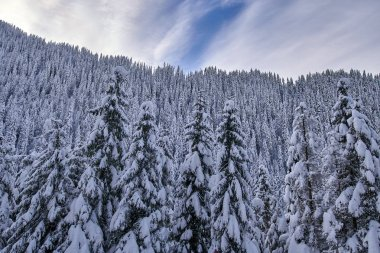 Mountain landscape with fir trees covered in snow at daytime
