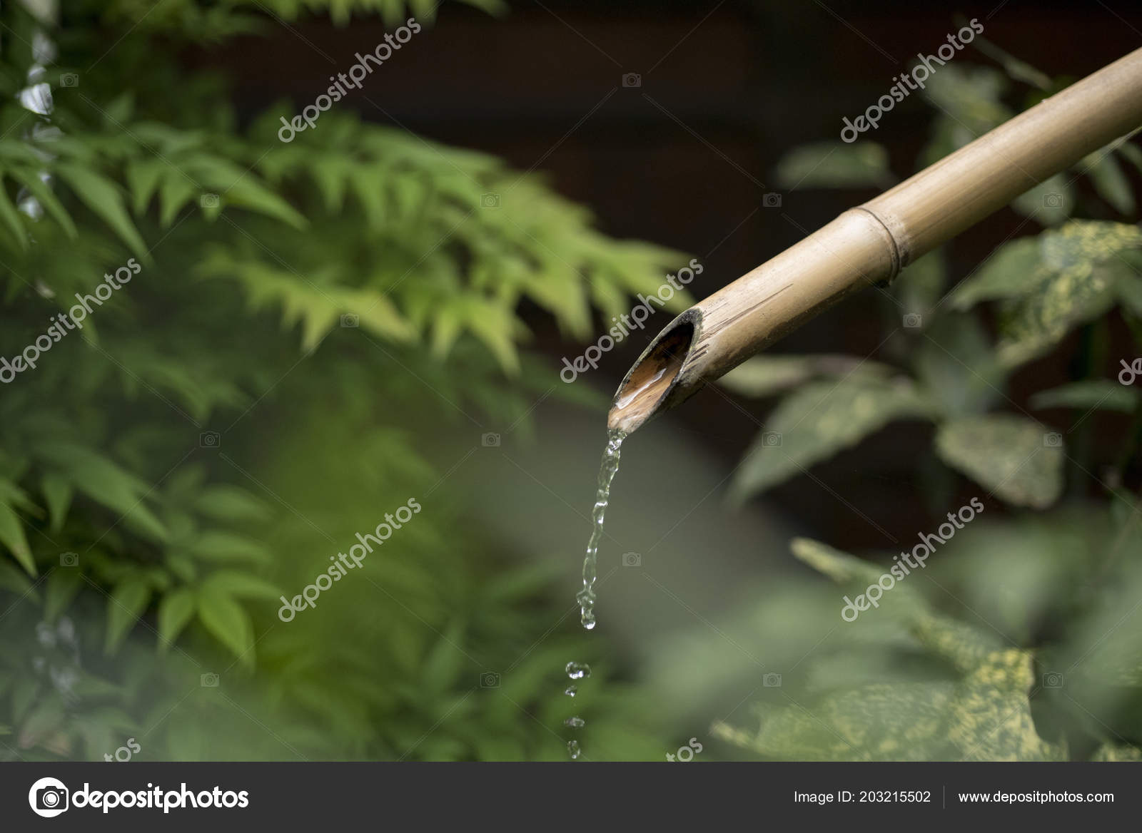 Bamboo Fountain Pouring Water Green Nature Background Traditional Japanese Garden Stock Photo