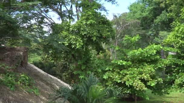 Zelené svěží džungle krajina s rostlinami a stromy
