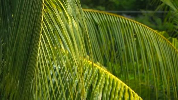 Tropická Palma odjíždí na prázdniny