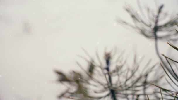 Vánoční zimní čas scéna pine tree listy a červené vánoční cetka ornament grafická karta pro dovolenou sezónu. Sledování venkovní sníh podzim záběr odhalil ruku se papíru řezu sobů.