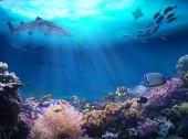 Fotografie Podvodní pohled na korálový útes. Život v oceánu