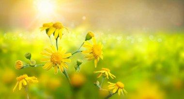 """Картина, постер, плакат, фотообои """"дикая мята с желтыми цветками при сильном солнечном свете. рано утром. природа . печать архитектура"""", артикул 379194256"""