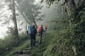 Fotografia climbers della montagna camminando sulla strada nella nebbia della foresta